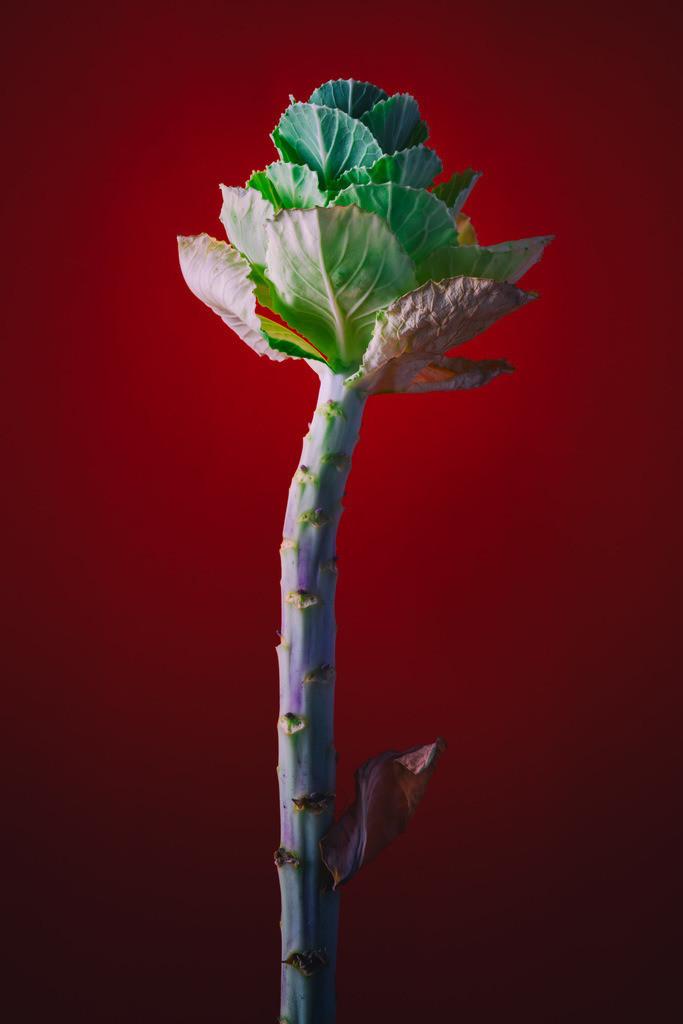 Pflanzenskulptur | Grüne Pflanze vor rotem Hintergrund.