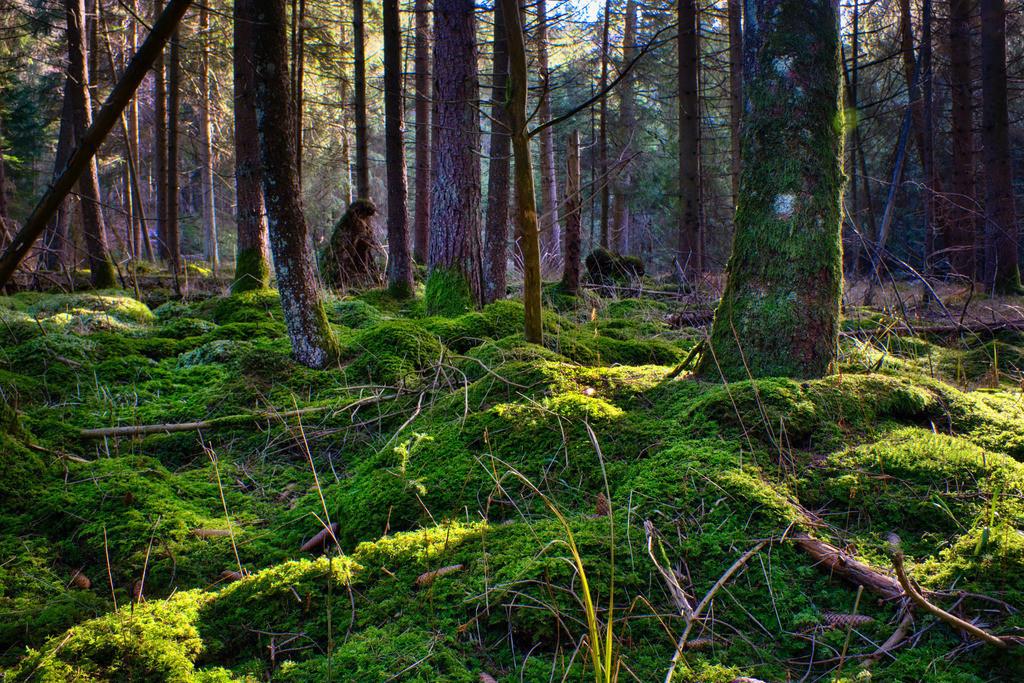 Nature Carpet