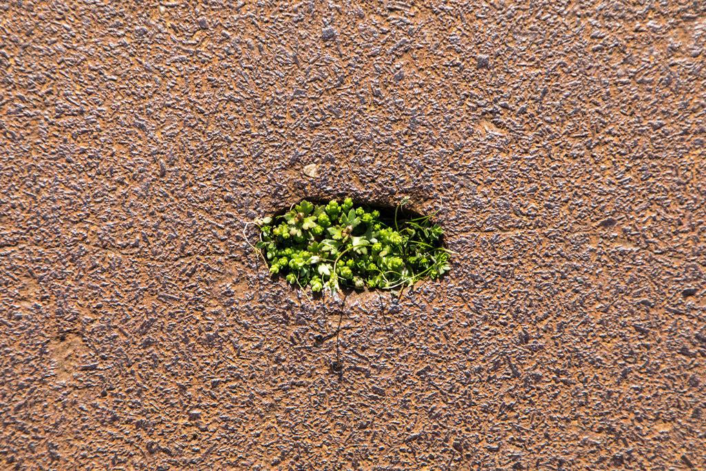 JT-180419-141 | Rostige Gusseisen Platte, in einem Industriegebiet, mit einer Vertiefung, dort hat sich Erde und Pflanzensamen angesammelt, im Frühjahr wächst Gras und kleine Grünpflanzen in dem Loch,