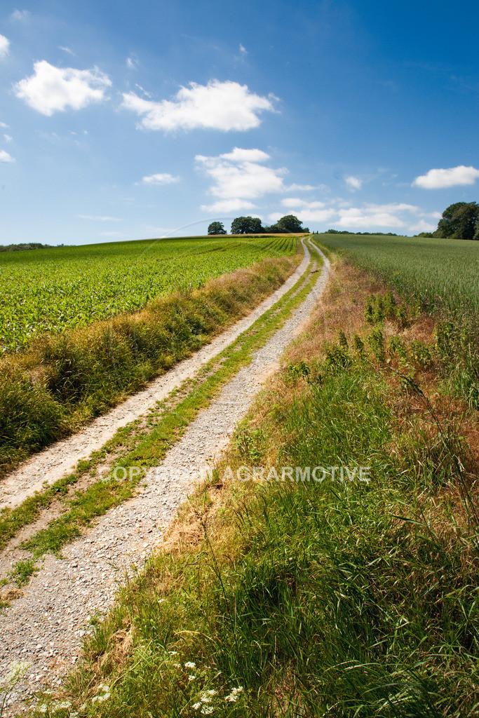 20090613-IMG_3186-43 | Symbolbild Zukunft - AGRARMOTIVE Bilder aus der Landwirtschaft