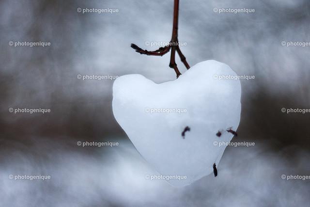 Herz aus Eis | Herz aus Eis hängt an einem Ast