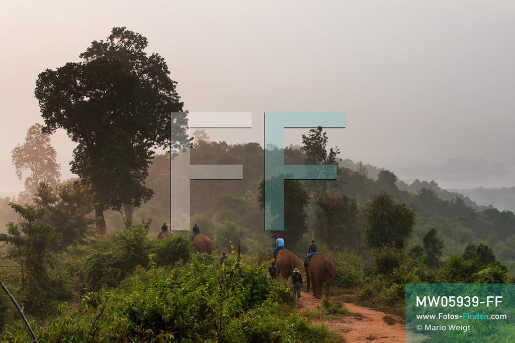 MW05939-FF   Thailand   Goldenes Dreieck   Reportage: Mahut und Elefant - Ein Bündnis fürs Leben   Mahuts auf ihren Elefanten am Morgen  ** Feindaten bitte anfragen bei Mario Weigt Photography, info@asia-stories.com **