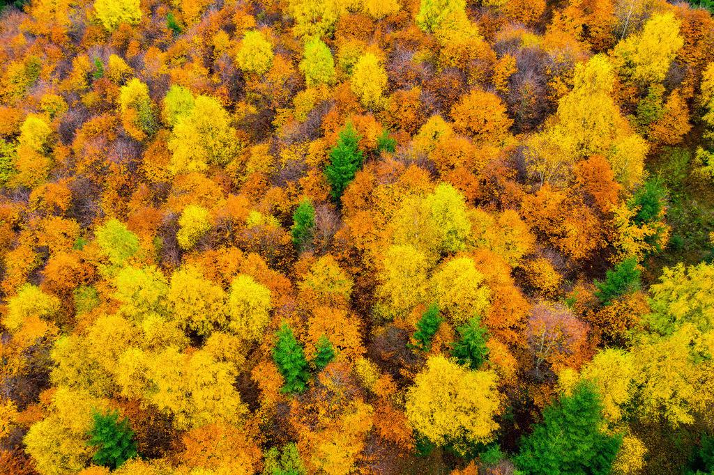 JT-181106-036 | Herbstlicher Wald im Sauerland, NRW, Deutschland, in der Nähe von Schmallenberg,