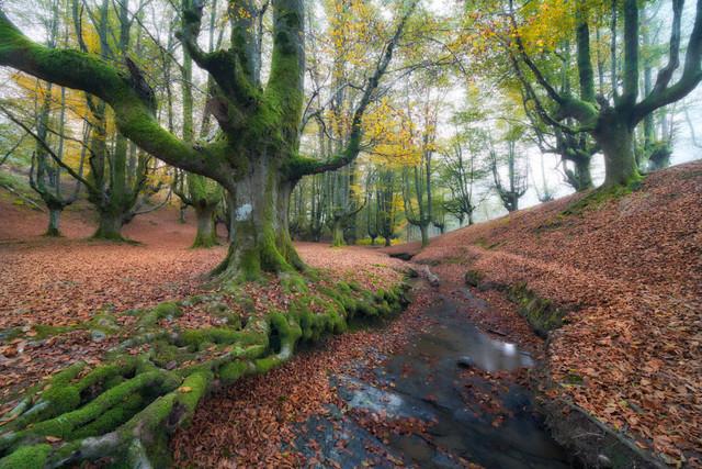 Mystischer Nebelwald | Wenn die feuchte Luft durch die Waldlandschaft wabert, die knorrigen Bäume mit Moos bewachsen sind und ein kleiner Bach leise vor sich hinplätschert, wähnt man sich in einer Fantasywelt. Dieser atmosphärische Morgen in einem baskischen Buchenwald beweist, dass es nicht immer ein farbenfroher Sonnenauf- oder -untergang sein muss.