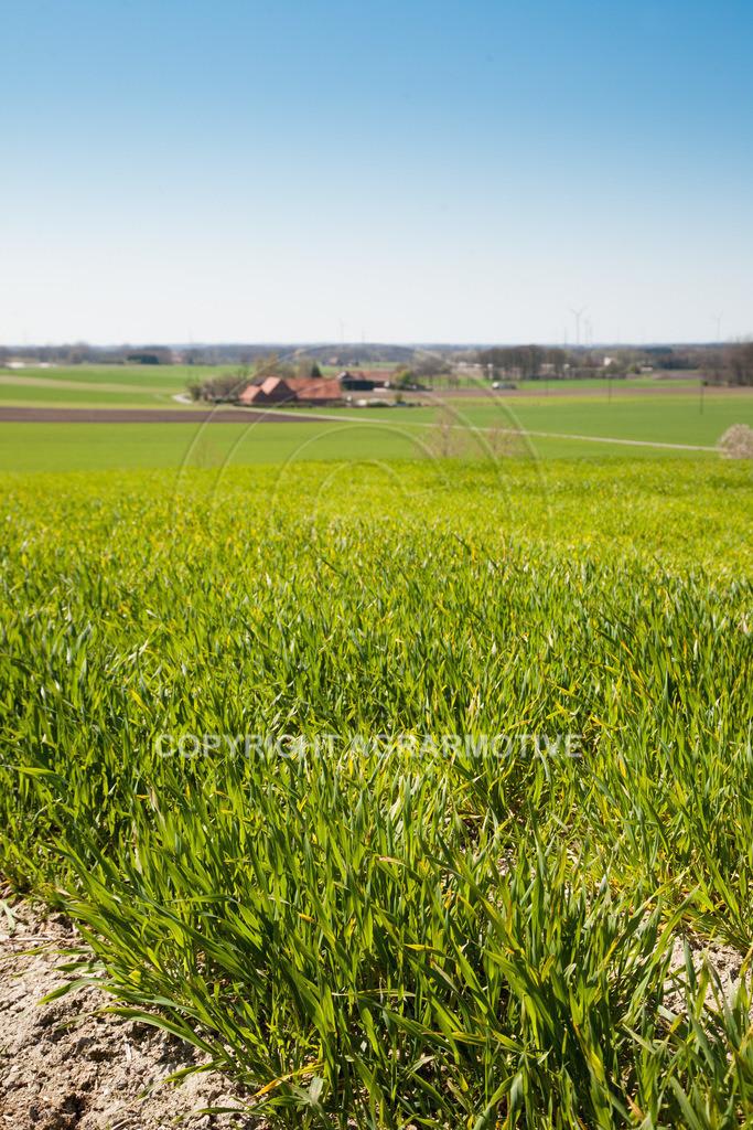 20100417-IMG_5643 | Frühlingslandschaft - AGRARFOTO Bildagentur