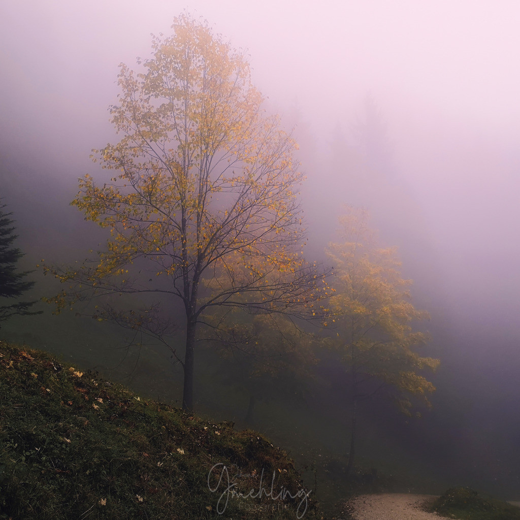 Herbst im Nebel | Linde in Herbstfarben. Blas im Nebel