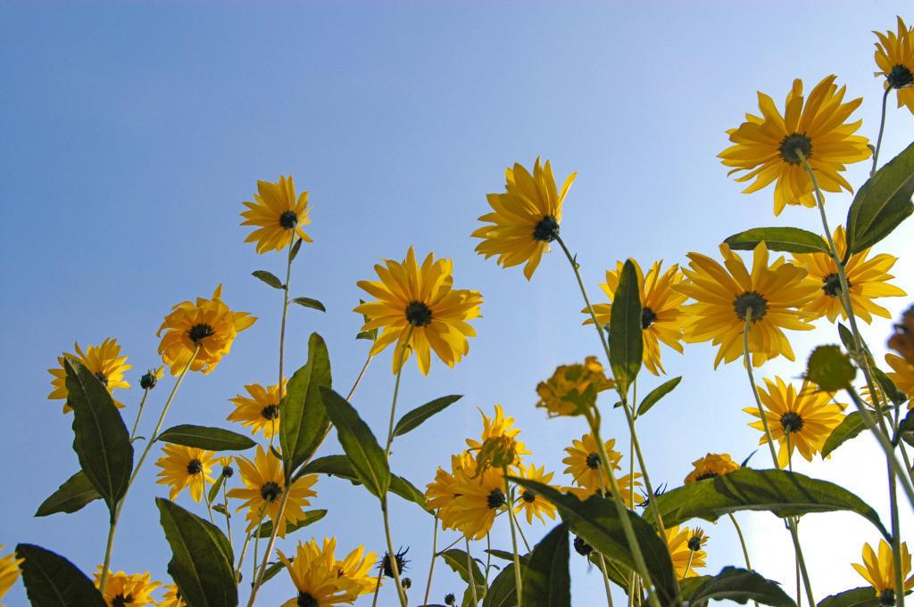Kreativität 13 | Sonnenblumen