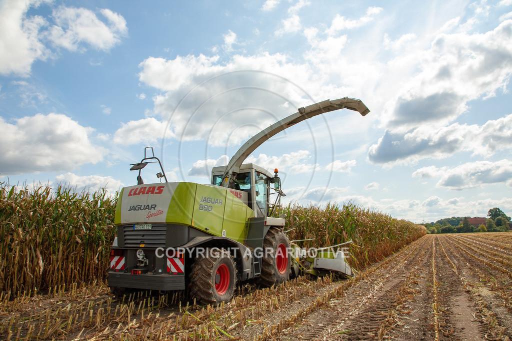 20080914-IMG_9025 | Silomais wird gehäckselt - AGRARFOTO Bilder aus der Landwirtschaft