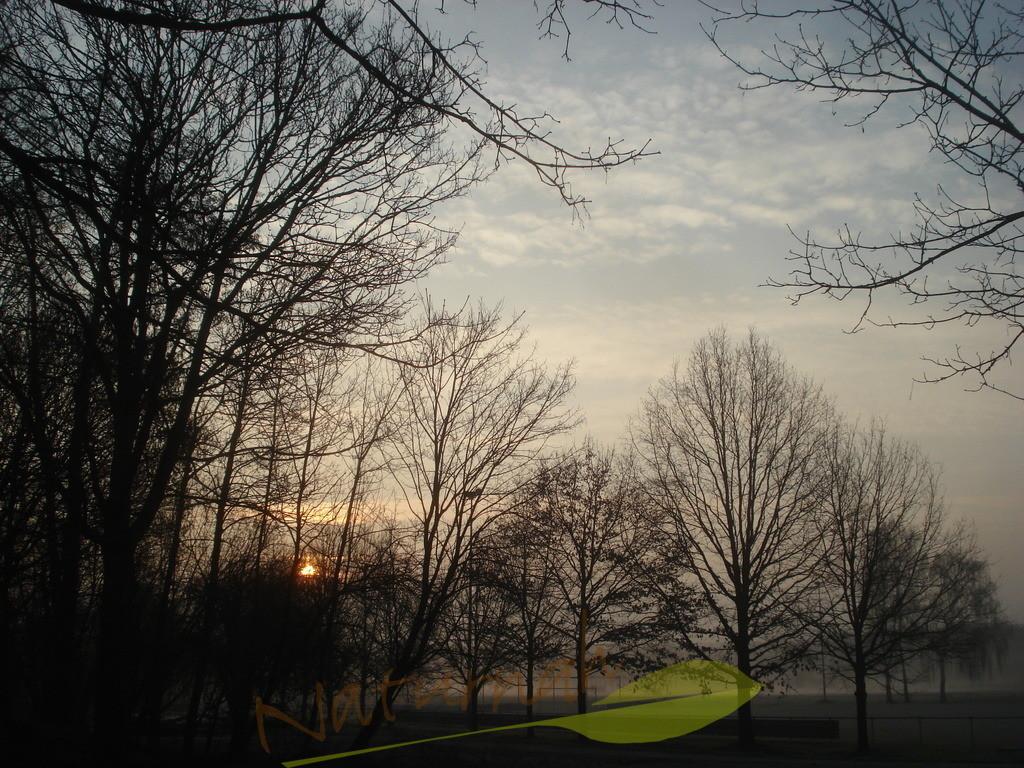 Sonnenaufgang mit Raureif
