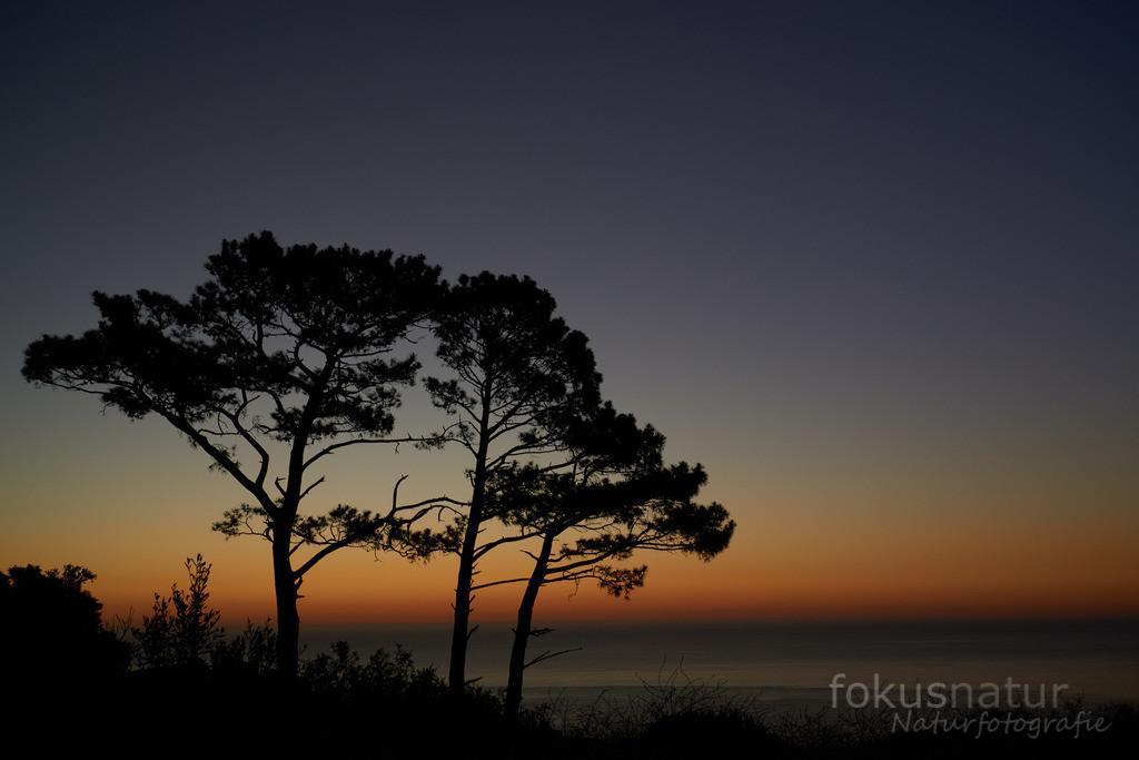 Bäume im Sonnenuntergang | Auf dem Signal Hill bei Kapstadt.