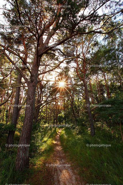 Uferwald an der Promenade Prora | Ein Weg führt in den Uferwald an der Promenade Prora bei Tageslicht. Aufnahme gegen die Sonne. Durch die Blätter blitzt ein Sonnenstern. Foto: Annett Kämmerer