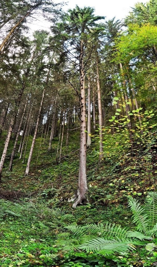 Michor-Wald-Okt-2012_019-p_1_1