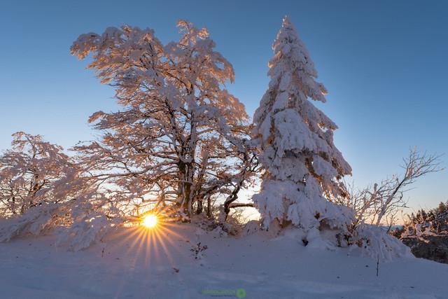 Verschneiter Sonnenaufgang | Verschneite Bäume im Sonnenaufgang