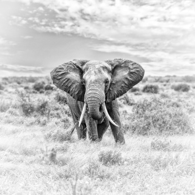 GIANT FineArt | Kenia