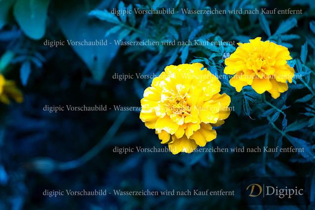 Blumen 2 - Vorschaubild | Gelbe Blume