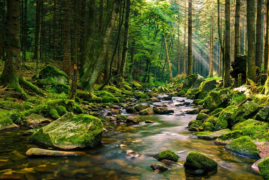 Bachlauf im Nordschwarzwald | Spätsommerlicher Gebirgsbach im Nordschwarzwald