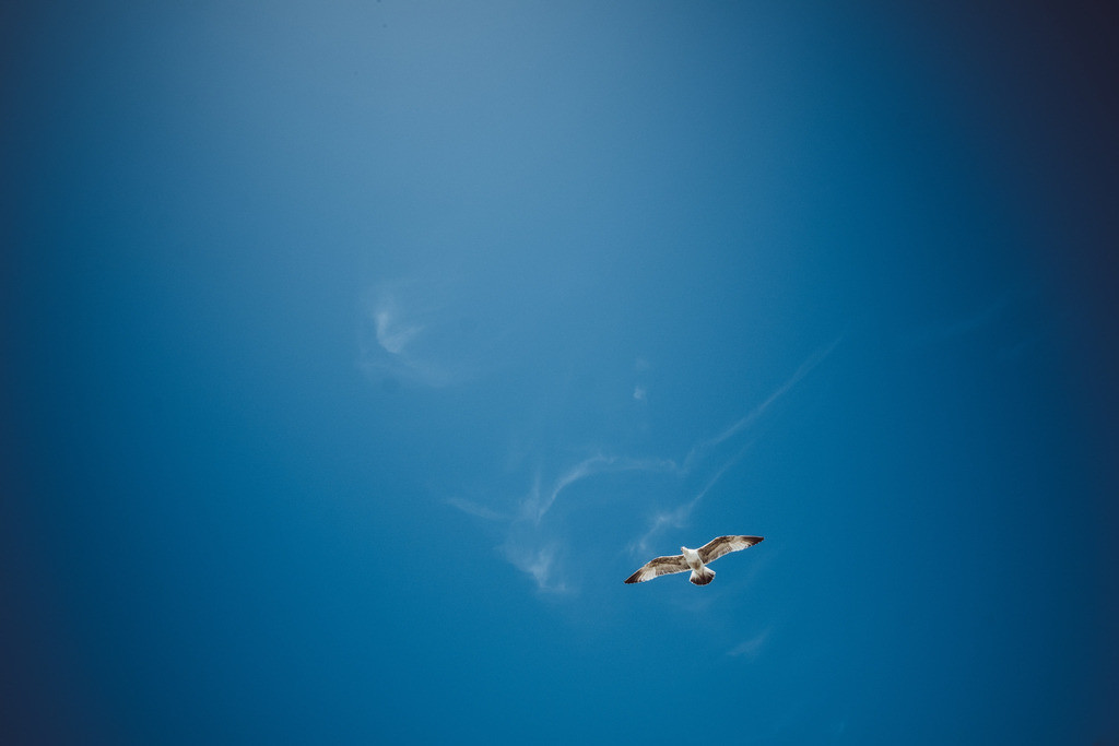 Brighton | Möwen kreisen am Himmel, Brighton, England