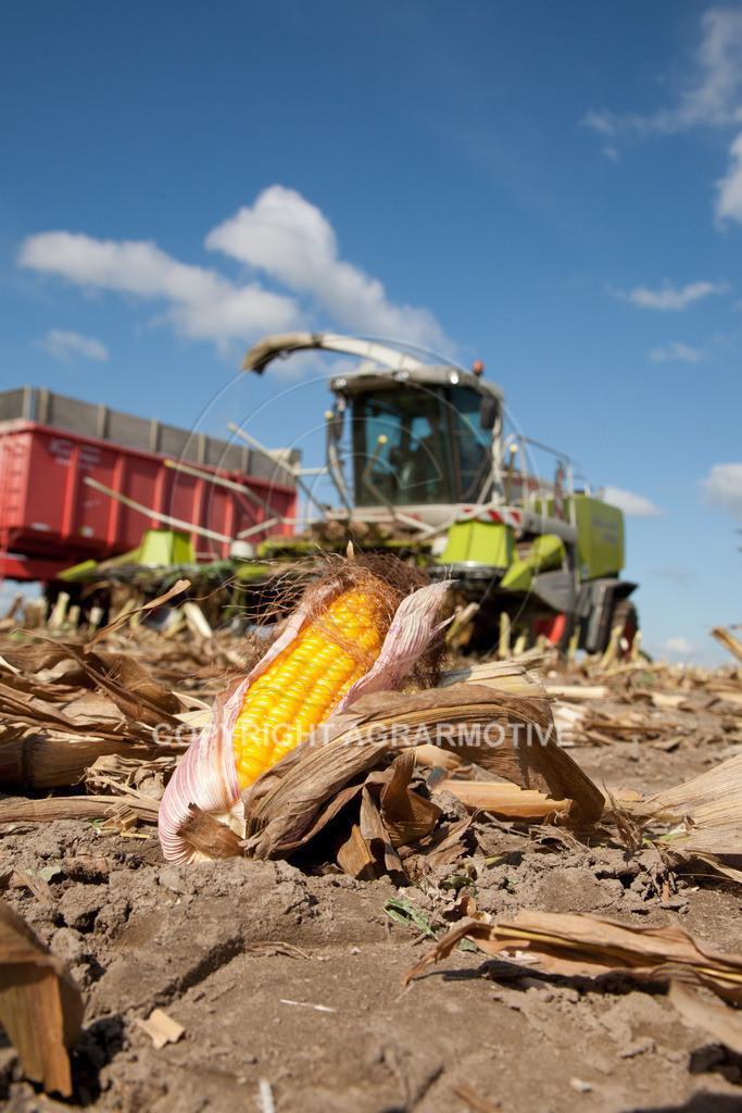 20080914-IMG_9018 | Silomais wird gehäckselt - AGRARFOTO Bilder aus der Landwirtschaft
