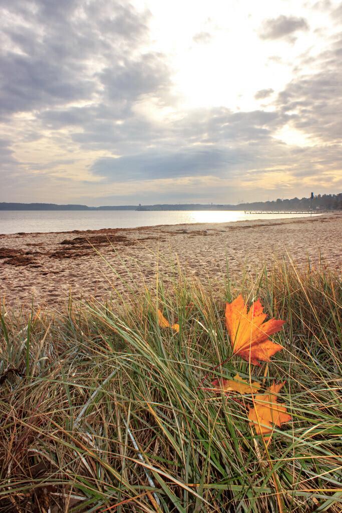 Strand in Eckernförde   Herbstblätter im Strandgras am Strand in Eckernförde