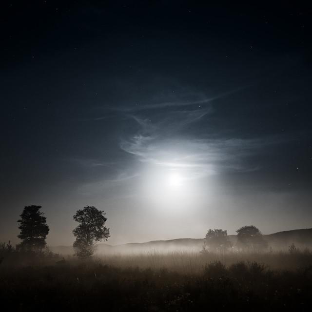 Mondnacht im Moor | Nächtlicher Streifzug im Großen Torfmoor bei Lübbecke