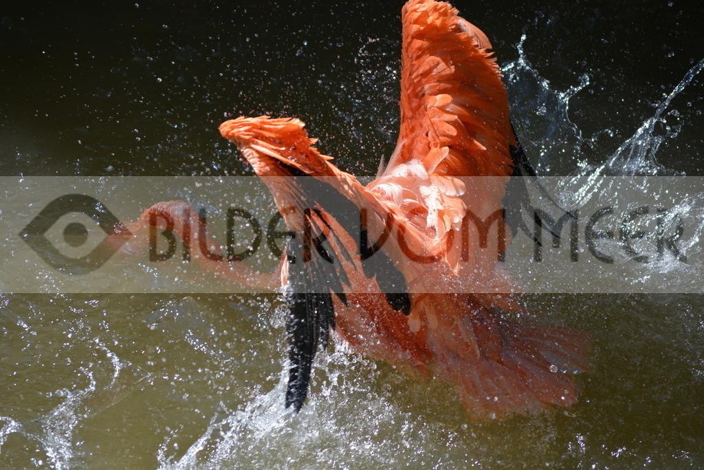 Flamingo Art Bilder | Roter Famingo Art Bilder