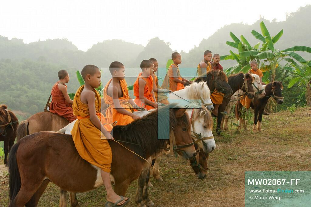 MW02067-FF | Thailand | Goldenes Dreieck | Reportage: Buddhas Ranch im Dschungel | Junge Mönche auf ihren Pferden am Morgen  ** Feindaten bitte anfragen bei Mario Weigt Photography, info@asia-stories.com **
