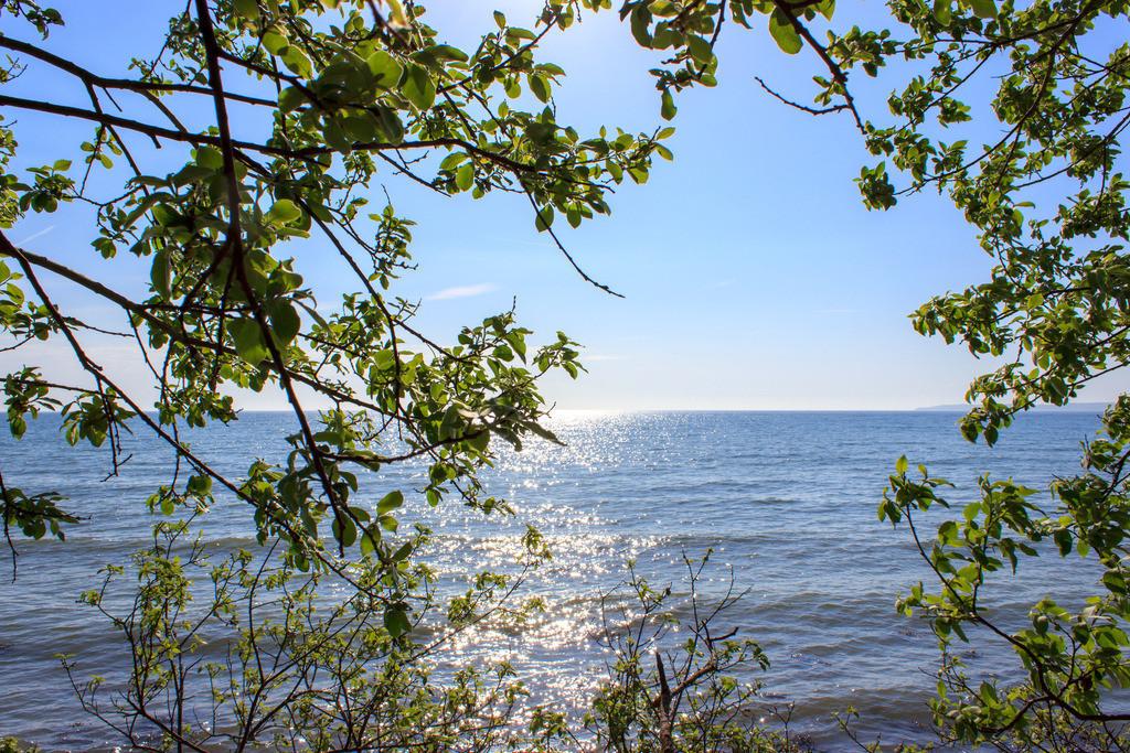 Strand in Kleinwaabs | Blick auf die Ostsee mit Zweigen im Vordergrund