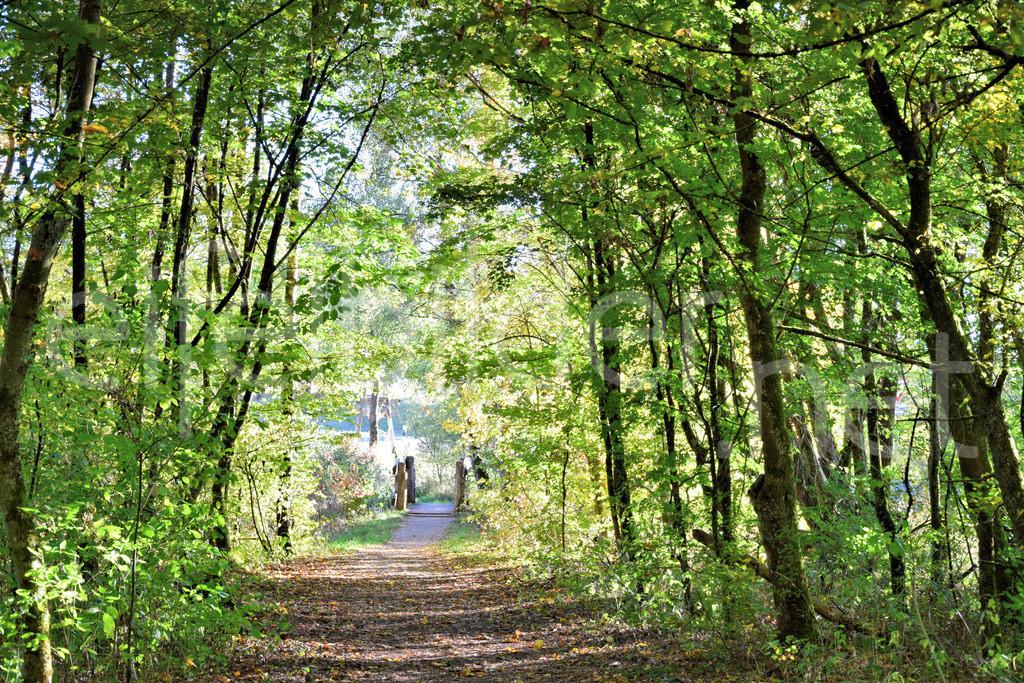 Wanderweg am Holzmaar | Das Holzmaar, eins der Gillenfelder Maare