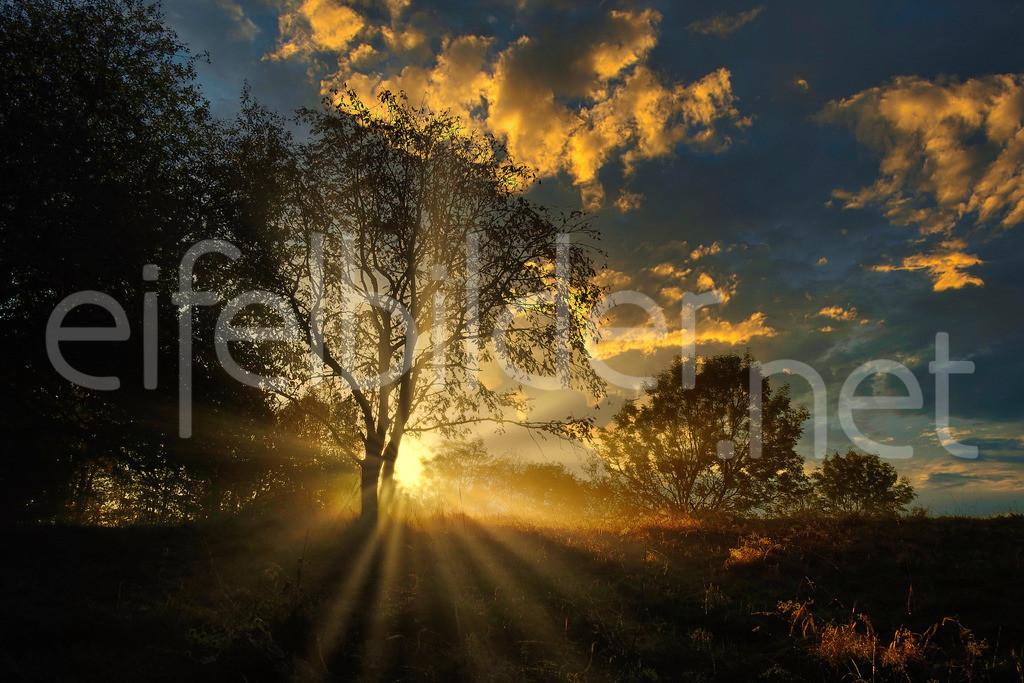 golden Morning | Goldener Morgen in der Vulkaneifel, fotografiert am Weinfelder Maar