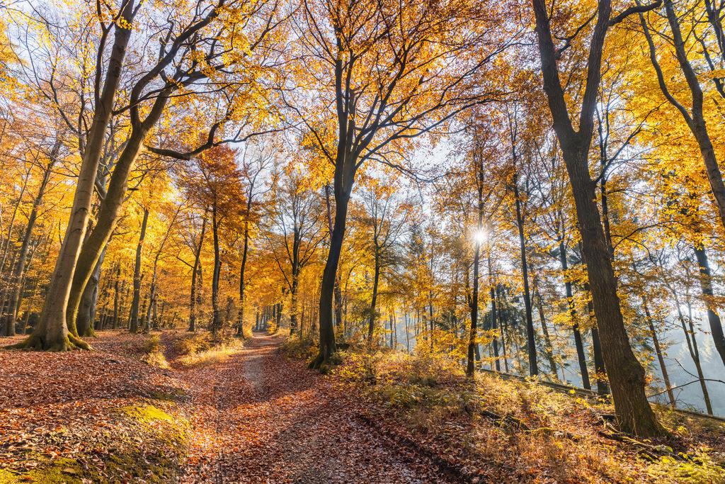Hermannsweg an der Hünenburg | Hermannsweg an der Hünenburg im Teutoburger Wald im Herbst.