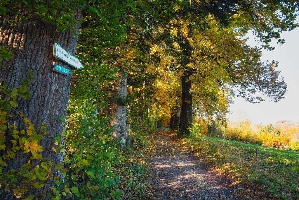 Herbstwanderung | Herbstwald mit Wanderweg zum Kirchwald in Nussdorf am Inn