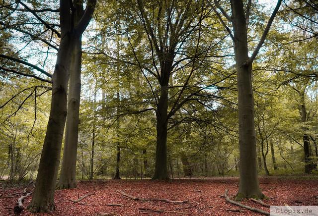 Raderbroicher Wald | Unterwegs im Raderbroicher Wald