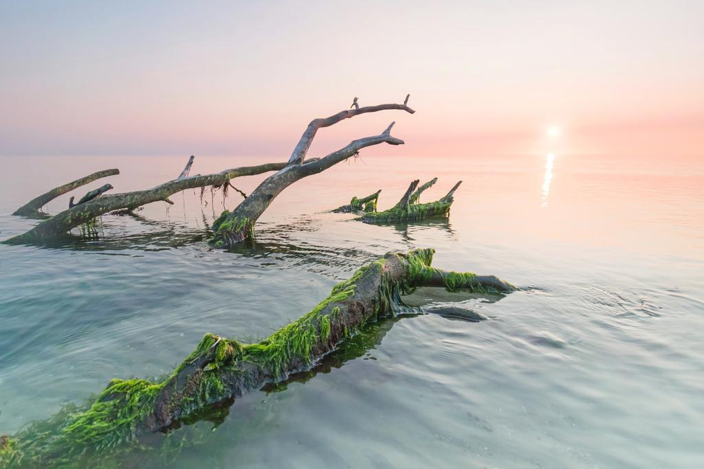 Abendstimmung, Westküste Darß   Die Serie 'Deutschlands Landschaften' zeigt die schönsten und wildesten deutschen Landschaften.