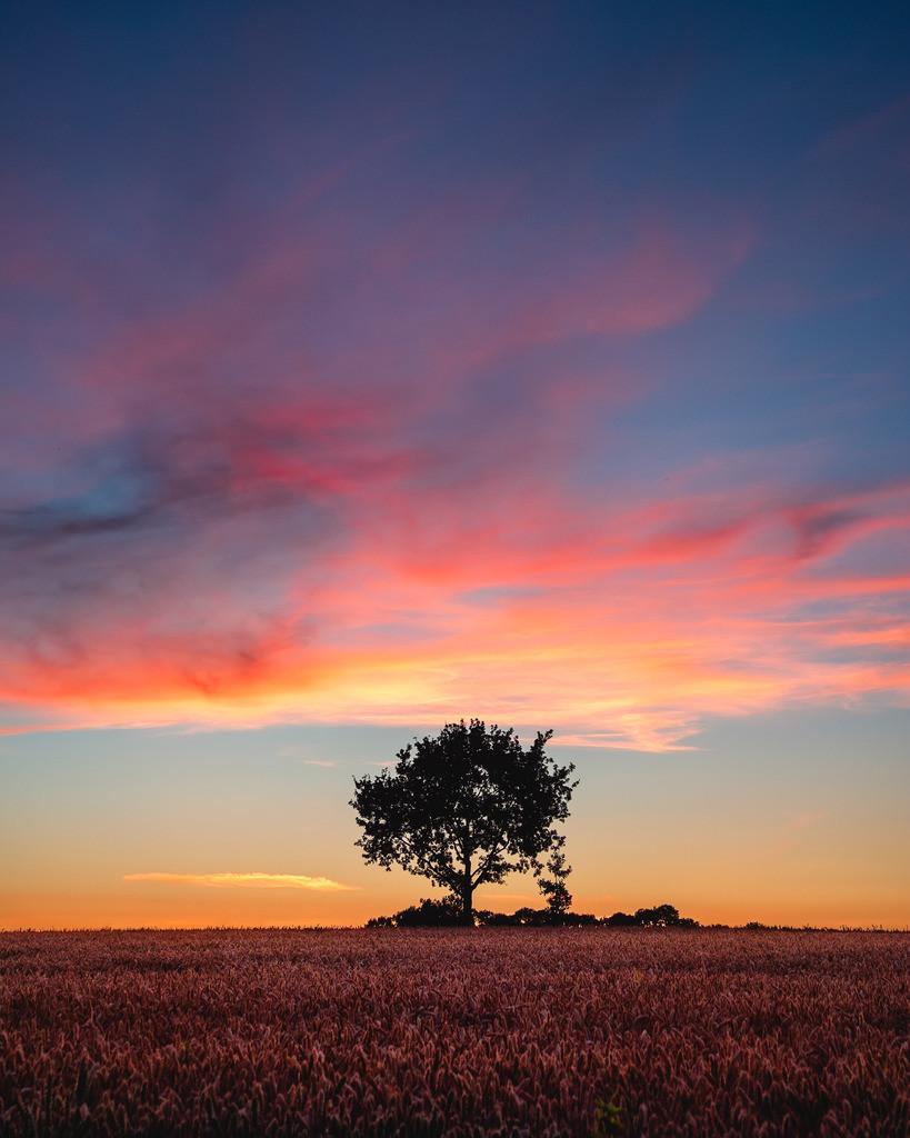The Orange Burst | Himmelskino über einem einsamen Baum im Hinterland.