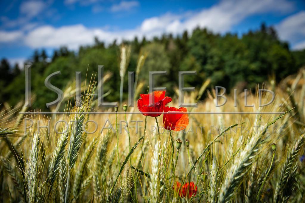 Naturschutzgebiet Doost | Mohn