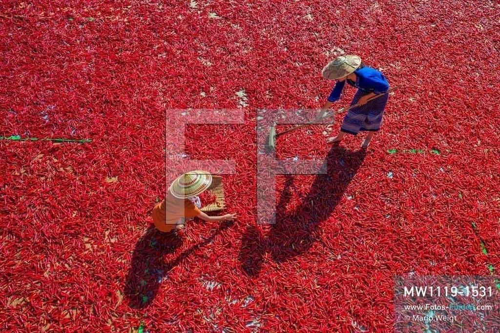 MW1119-1531 | Myanmar | Shan State | Reportage: Manche mögen's scharf | Rote Chilischoten trocknen in der Sonne. Dabei müssen sie häufig gewendet und aussortiert werden. Chili wird als Gewürz, ob als ganze Schote, Flocken oder Pulver, in vielen Küchen verwendet.   ** Feindaten bitte anfragen bei Mario Weigt Photography, info@asia-stories.com **