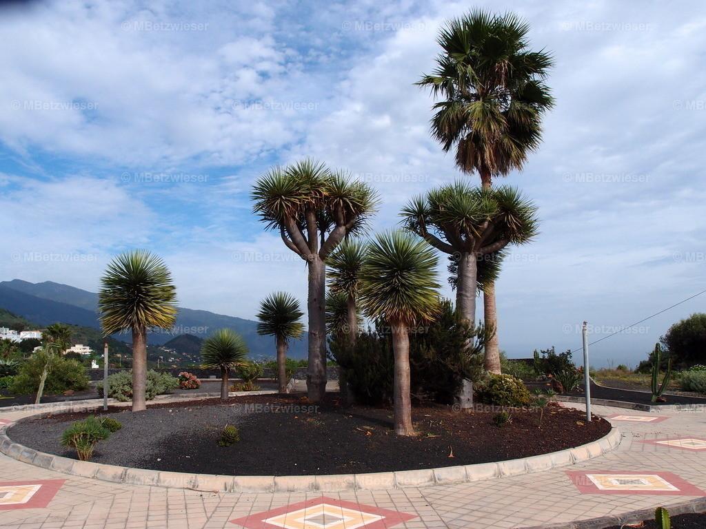 PC087360 | in Mazo auf La Palma