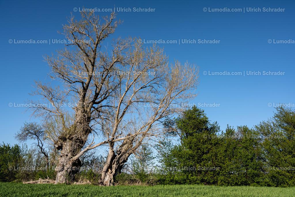 10049-10758 - Alter Baum   max. Auflösung 8256 x 5504