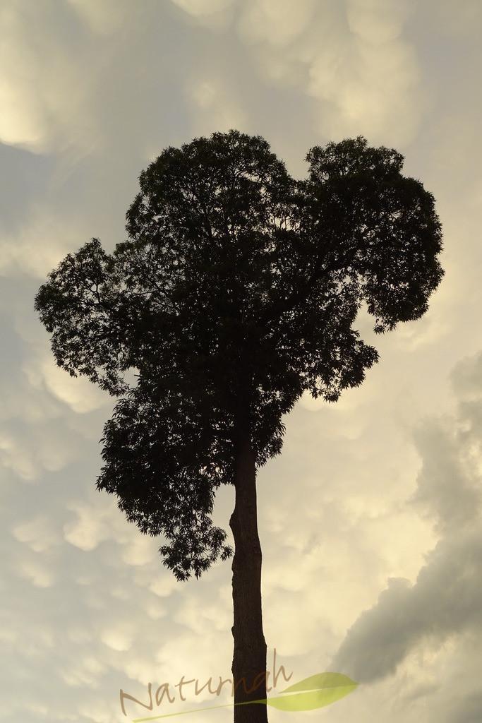 Klosterbaum mit Wolkenkraft