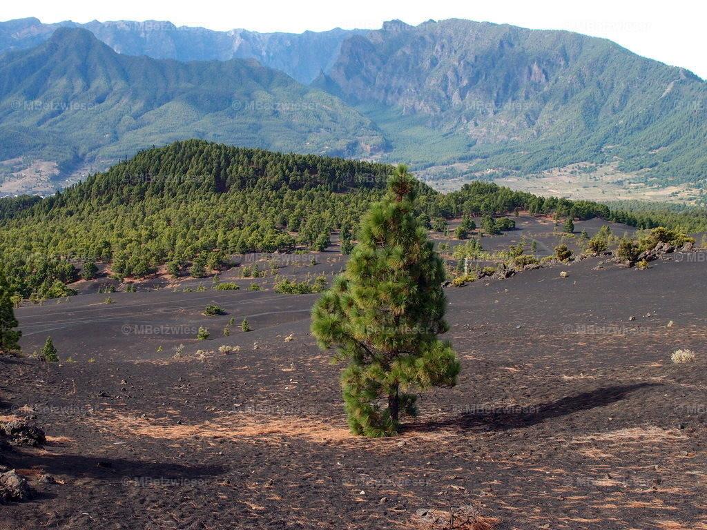P9166571 |  Llano del Jable  - die Lava-Picon Fläche auf 1341 m in El Paso