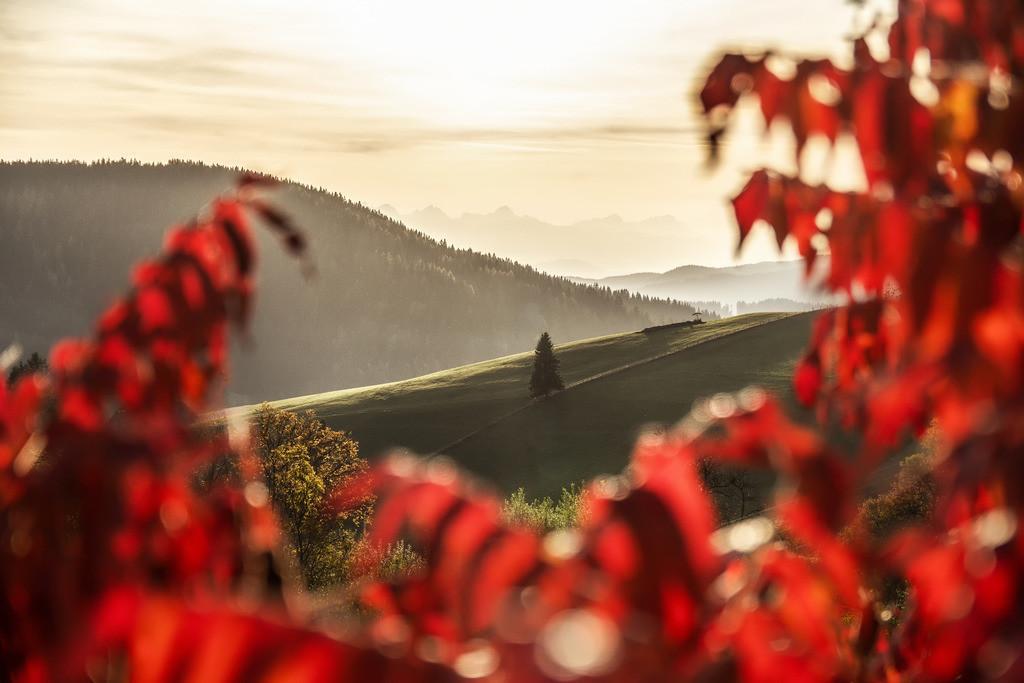 Blätterrahmen | Diex
