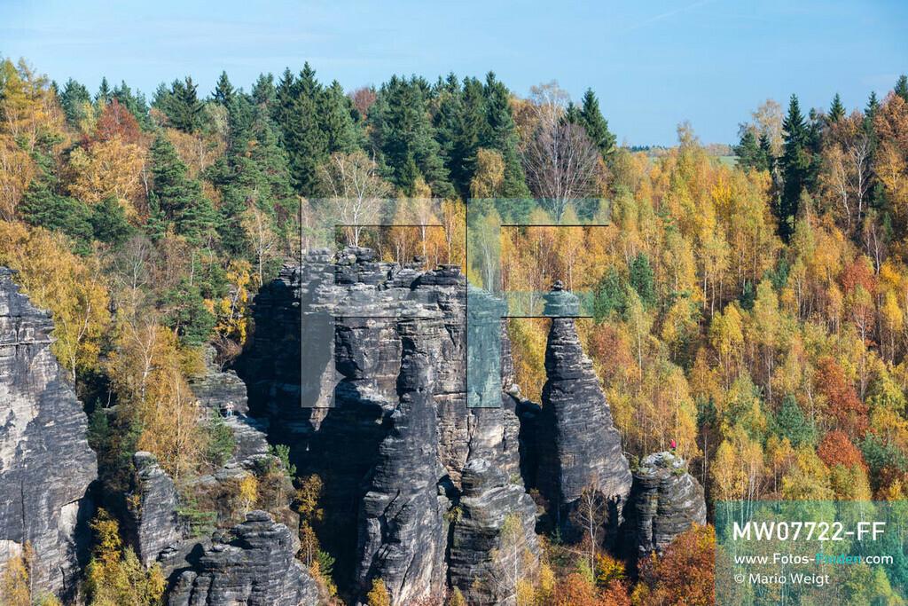 MW07722-FF | Deutschland | Sachsen | Sächsische Schweiz | Blick auf die Felstürme Herkulessäulen und Schraubenkopf im Herbstwald. Das Bielatal mit dem Flüsschen Biela ist eines der beliebtesten Klettergebiete des Elbsandsteingebirges mit über 230 Gipfeln und 3.000 Klettersteigen.  ** Feindaten bitte anfragen bei Mario Weigt Photography, info@asia-stories.com **