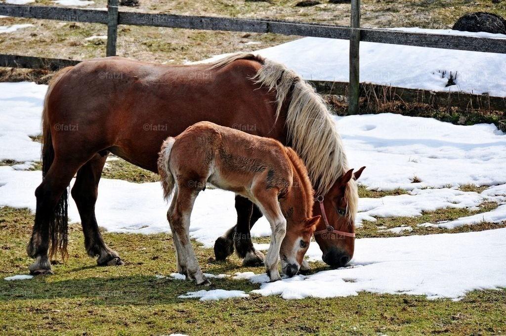 pferde-200310_125k