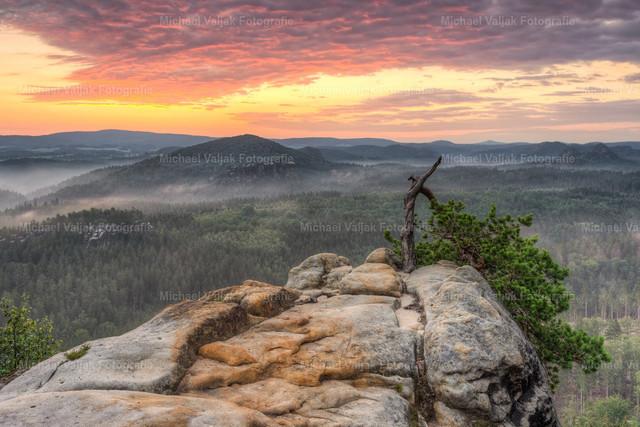 Sonnenaufgang in der Sächsischen Schweiz | Aussicht oberhalb der unteren Häntzschelstiege in der Sächsischen Schweiz an einem Morgen im Sommer. Seit Jahrzehnten schon trotzt die verkorkste Kiefer Wind und Wetter in der sehr exponierten Lage am Rande des Sandsteinfelsens.