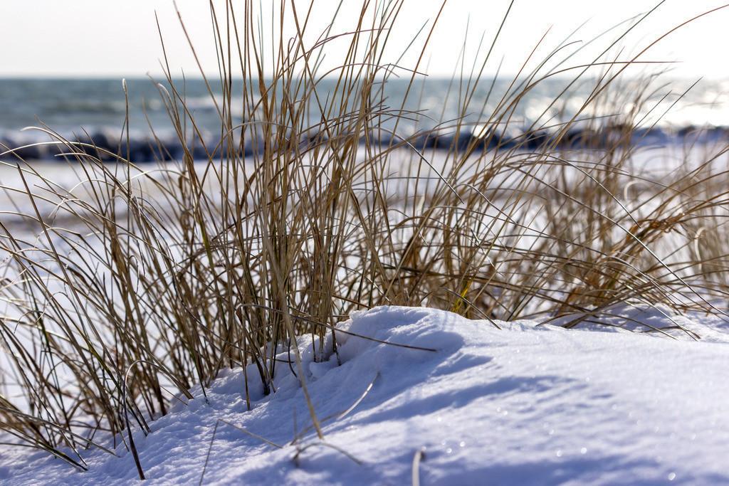 Strand in Schönhagen   Strandhafer und Schnee am Strand in Schönhagen