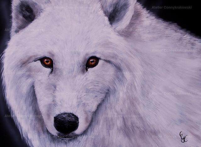 Wolf4000 | OLYMPUS DIGITAL CAMERA