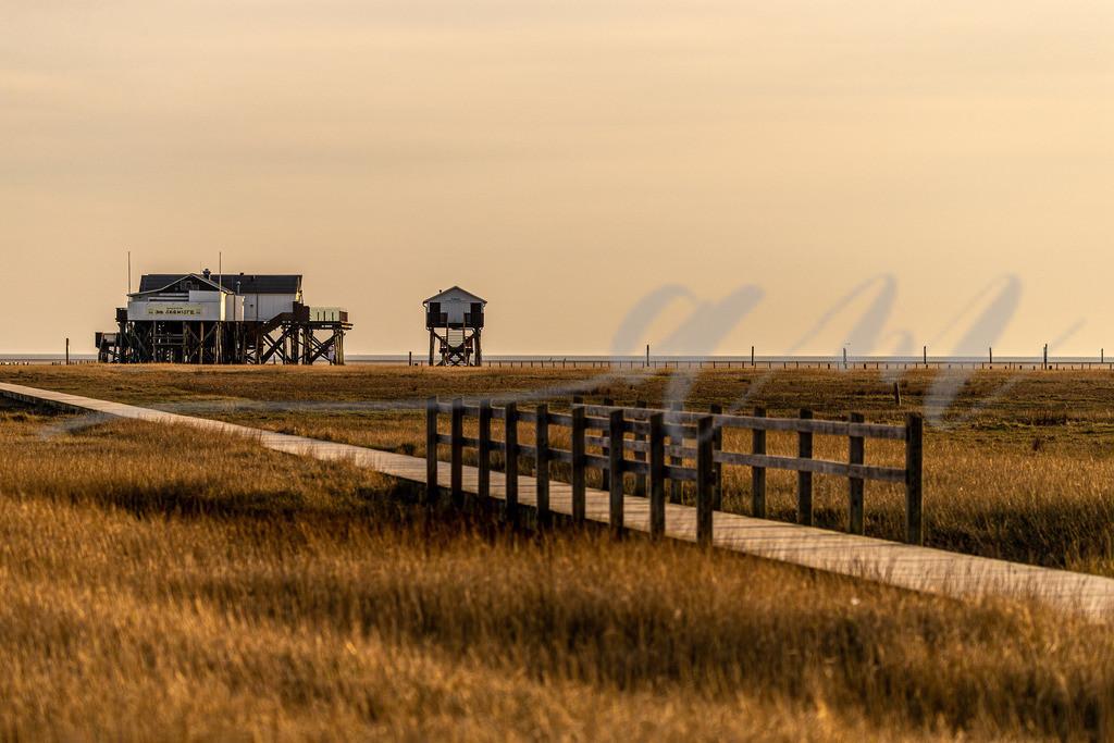 Weg zum Strand in Böhl | Der Weg ist das Ziel, wenn man durch die Salzwiese zum Böhler Strand geht und die Salzluft einatmet