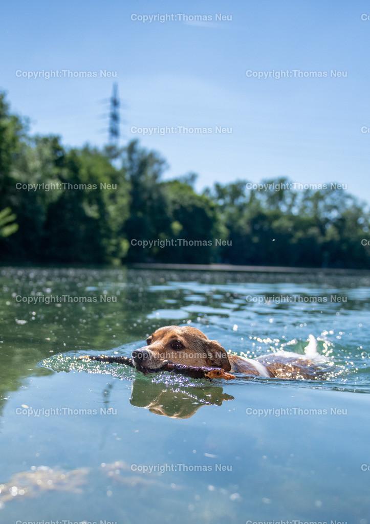 DSC_4694 | Bensheim, Badesee, Sommer, Stadtmagaziin 54, der kleine Nemo macht seinen Namen alle Ehre, ,, Bild: Thomas Neu