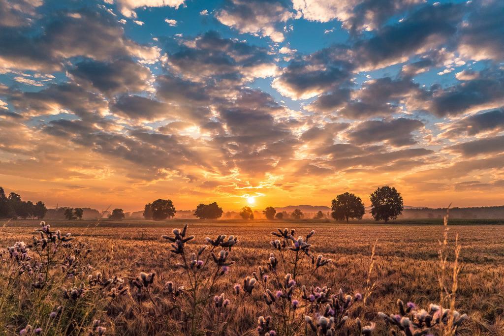 Sonnenaufgang bei Hofweier/Oberschopfheim | Dramatisches Morgenlicht