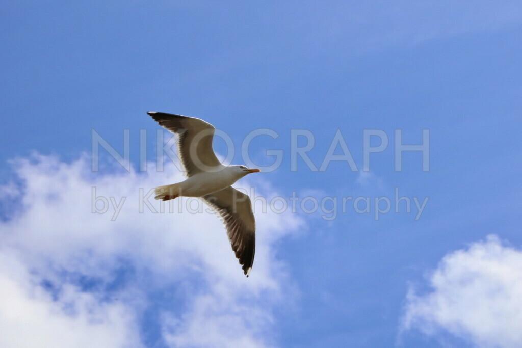 Möwe | Eine Möwe am Himmel über der Nordseeinsel Texel.